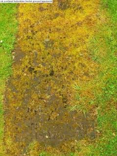 Boleskine Burial Ground (15)