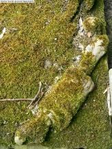 Kinlos Burial Ground (3)