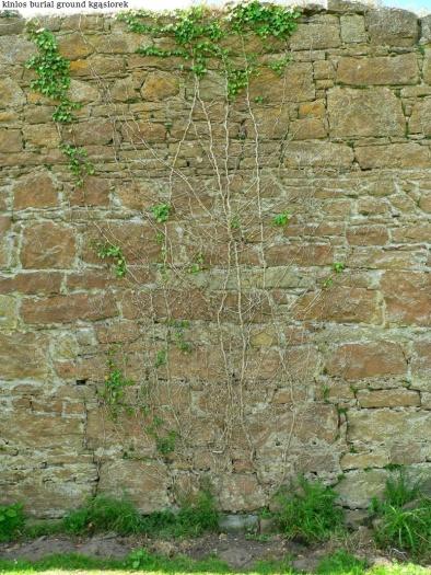 Kinlos Burial Ground (40)